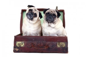 Pet shipping Italy, international pets in safe transfer